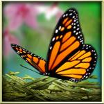 Season Zen Free | 【ライブ壁紙】癒やしの鳥の巣